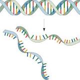 PCR-01